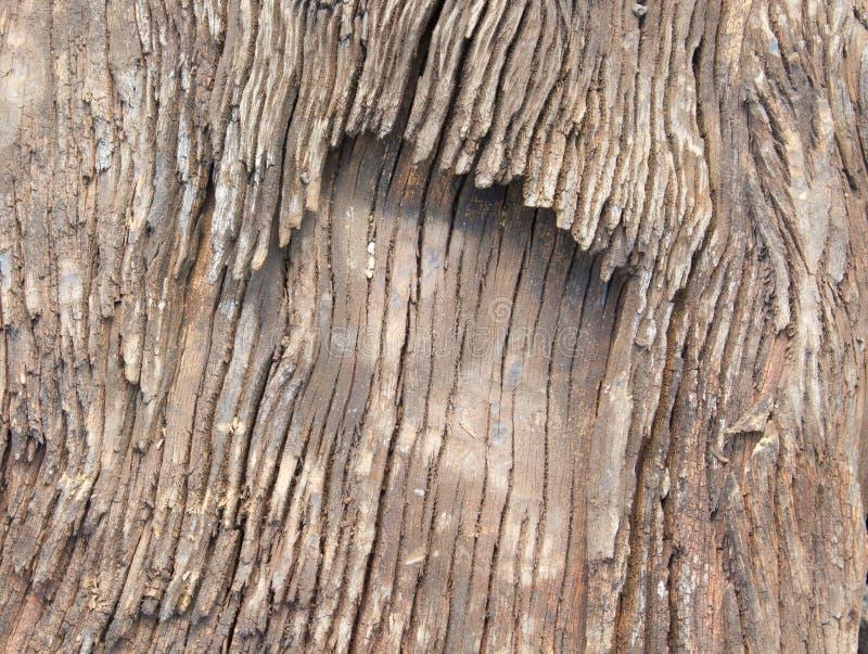 Download Textura de madeira velha imagem de stock. Imagem de velho - 29845937