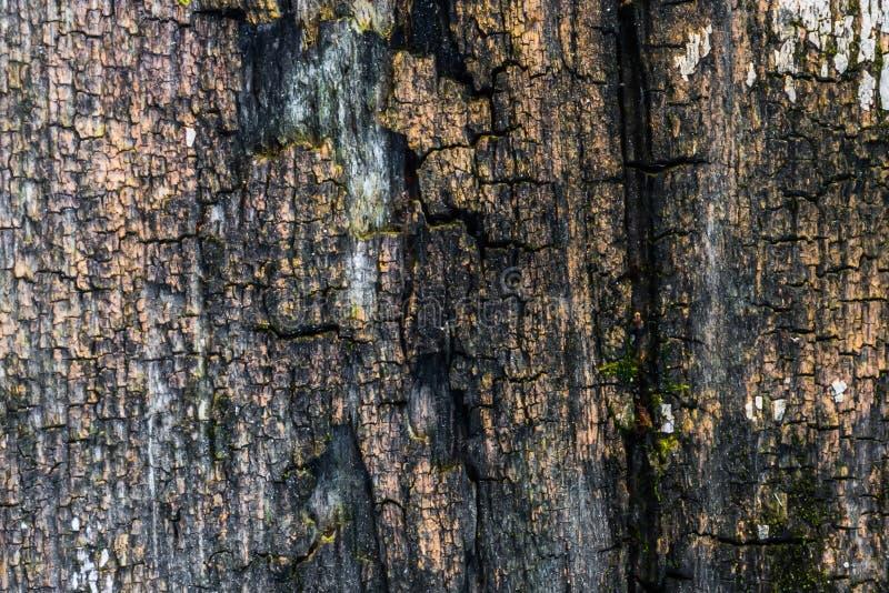 A textura de madeira velha com testes padrões e quebras naturais na superfície como o fundo Escureça do centro fotografia de stock royalty free