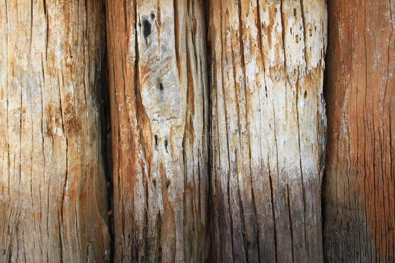 Textura de madeira A madeira velha do log um a parte do tronco ou um grande ramo de uma árvore foi alinhada para fazer a parede imagens de stock royalty free