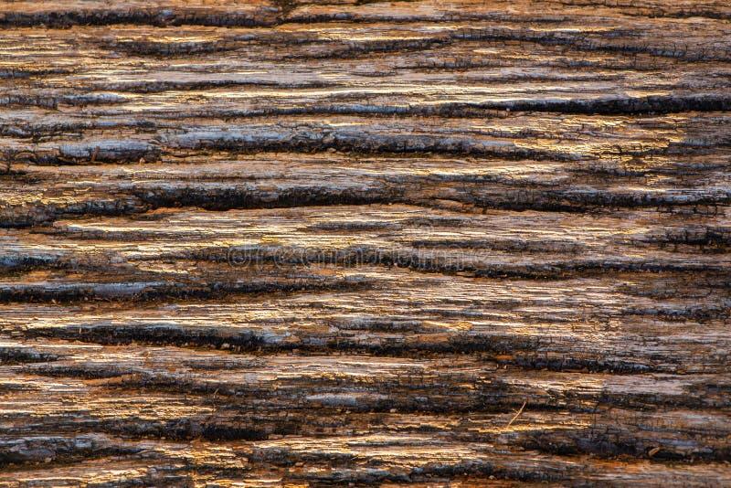 Textura de madeira velha fabulosa, textura bonita imagem de stock