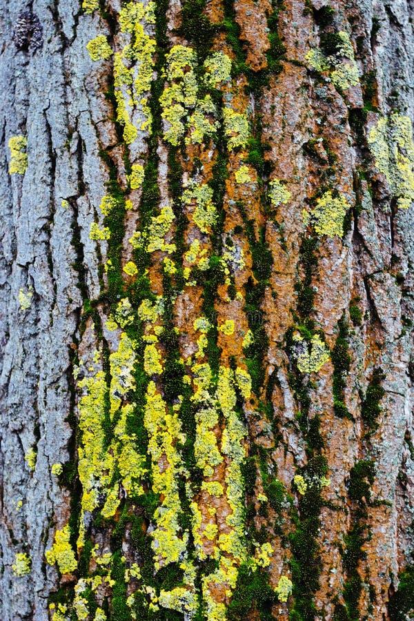 Textura de madera coloreada multi, fondo fotos de archivo