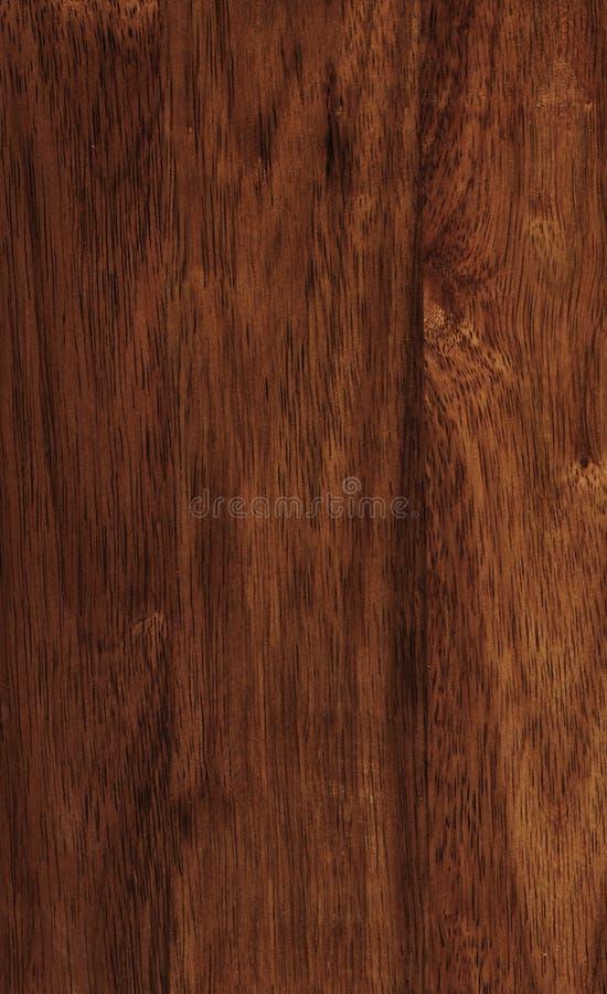 Textura de madera de la Hevea foto de archivo