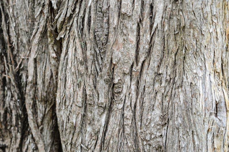 Textura de madera de la pared imágenes de archivo libres de regalías