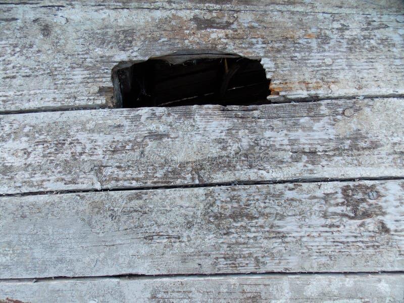 Textura de madera de los tableros del grano foto de archivo libre de regalías