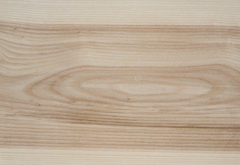 Textura de madera del árbol de ceniza imagen de archivo