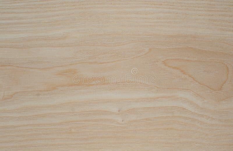 Textura de madera del árbol de ceniza foto de archivo