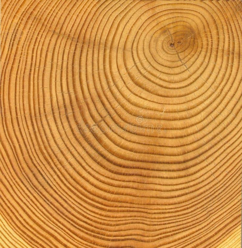 Textura de madera del corte fotografía de archivo