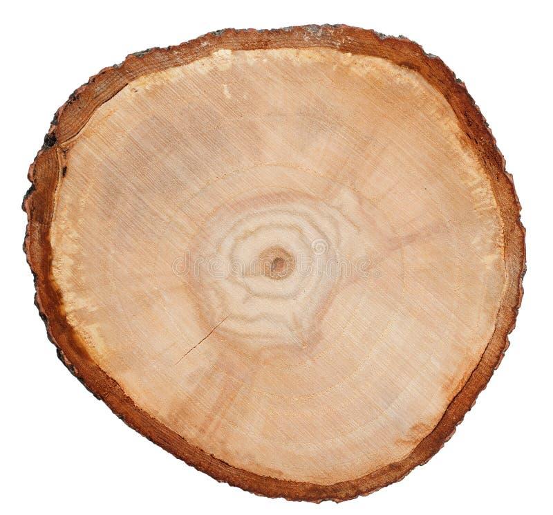 Textura de madera del corte de la cruz del tronco de árbol fotografía de archivo libre de regalías