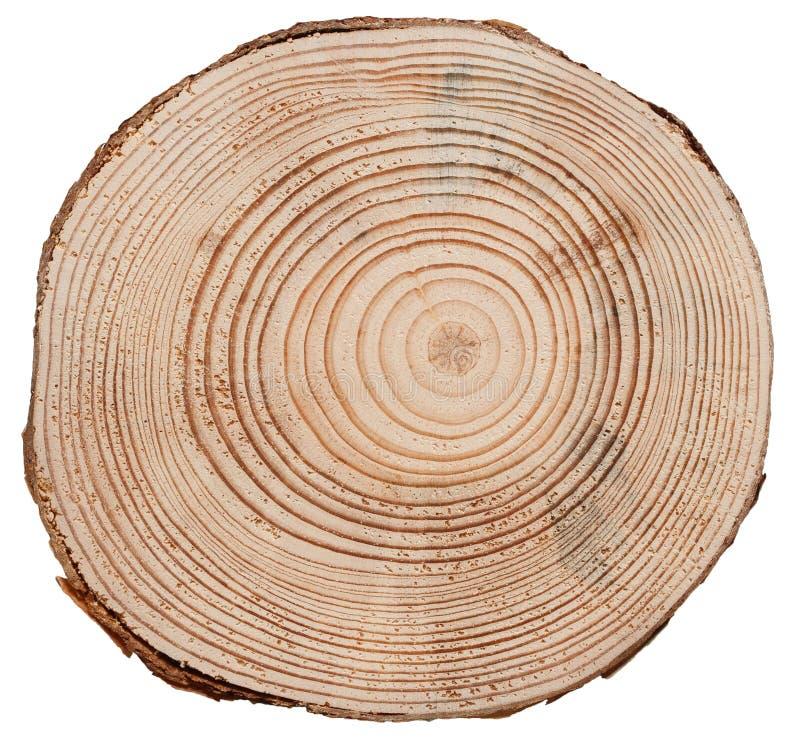 Textura de madera del corte de la cruz del tronco de árbol imagen de archivo