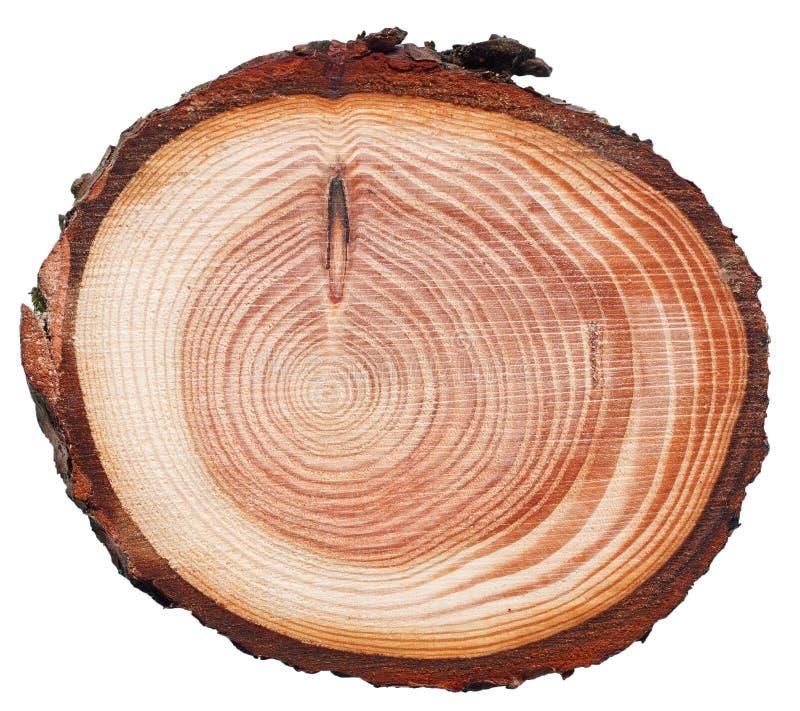 Textura de madera del corte de la cruz del tronco de árbol de la sacudida fotografía de archivo