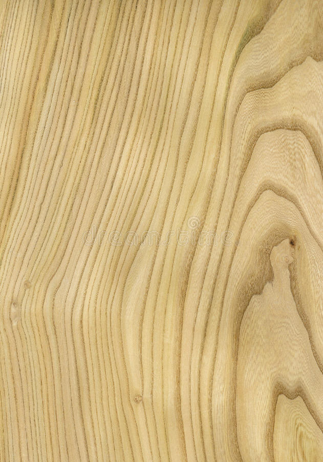 Textura de madera del olmo fotos de archivo libres de regalías