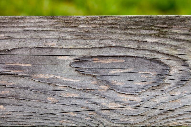 Textura de madera del tabl?n para el fondo foto de archivo