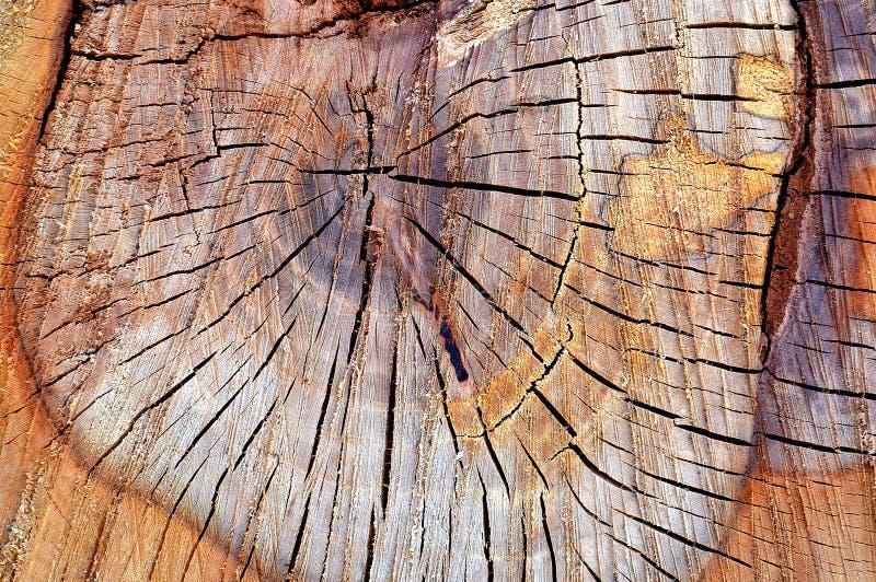 Textura de madera del tablero con el tablero de madera de los tornillos fotos de archivo libres de regalías