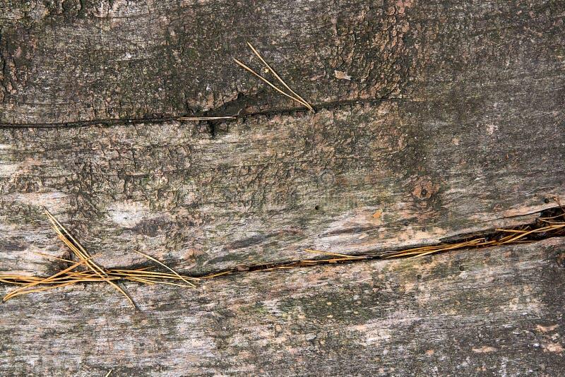 Textura de madera del tronco de árbol cutted Musgo y hongo que crecen en el th imagenes de archivo