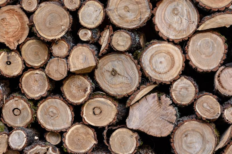 Textura de madera Fondo de los cortes de madera, registros redondos Corte transversal del ?rbol foto de archivo libre de regalías