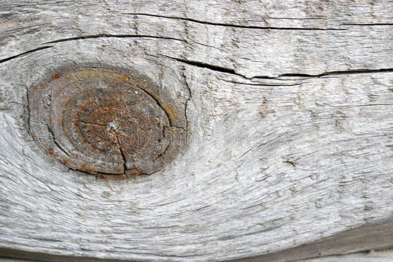 Textura de madera gris con la rama grande y modelo hermoso de las fibras de madera foto de archivo libre de regalías