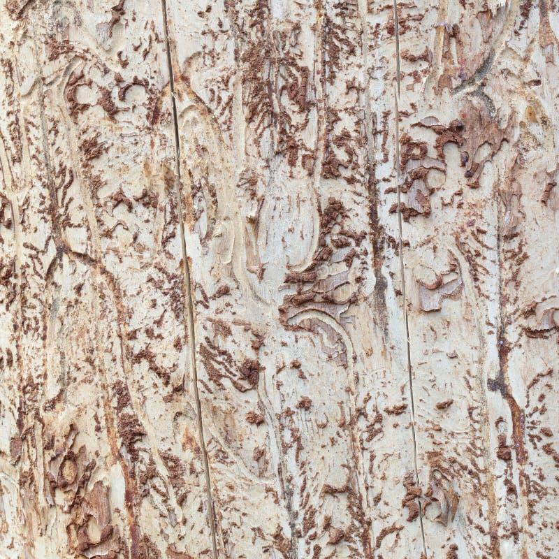 Textura de madera gruesa desnuda abstracta fotos de archivo libres de regalías