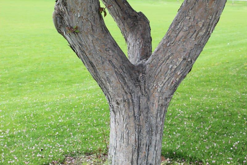Textura de madera k de la corteza de árbol fotos de archivo
