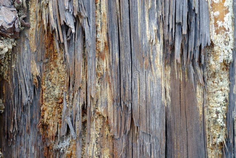 Textura de madera putrefacta imagenes de archivo