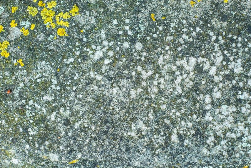 Textura de pedra detalhada com líquene fotografia de stock