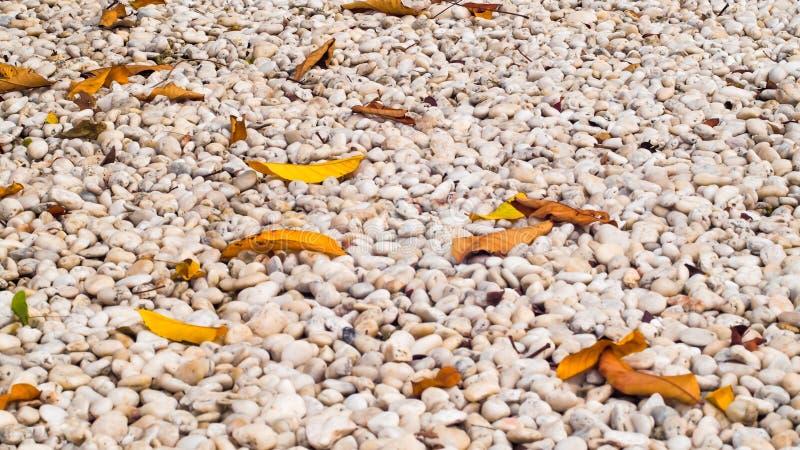 Textura de pedra dos seixos brancos e folhas secas na terra fundo do conceito da ideia do zen da natureza fotografia de stock royalty free