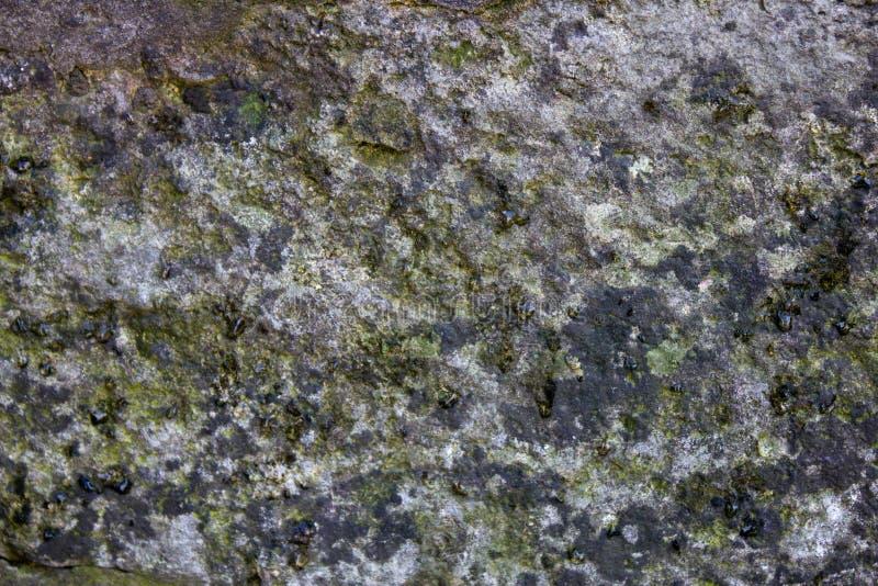 Textura de pedra musgoso cinzenta com riscos pequenos imagem de stock