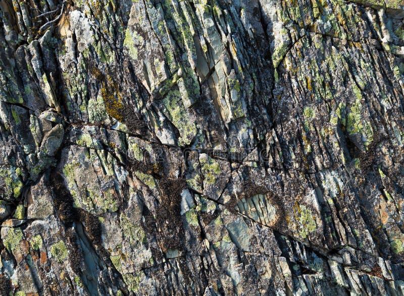 Textura de piedra con el musgo imagen de archivo