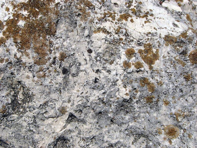 Textura de piedra Superficie detallada de la piedra ligera vieja con los liquenes rojos fotos de archivo libres de regalías