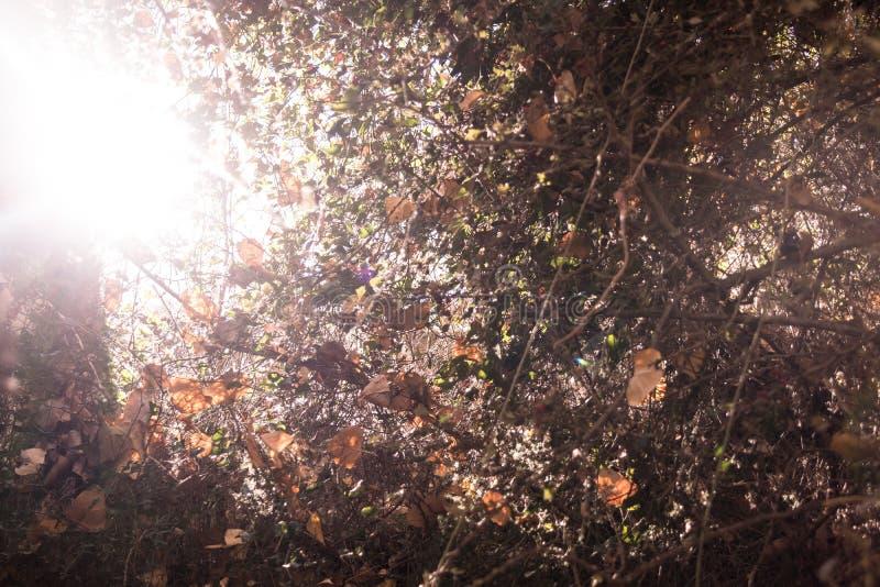 Textura de ramas con el sol Primavera fotos de archivo libres de regalías