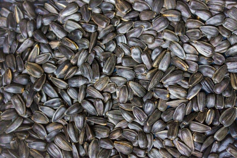 Textura de sementes de girassol fotos de stock