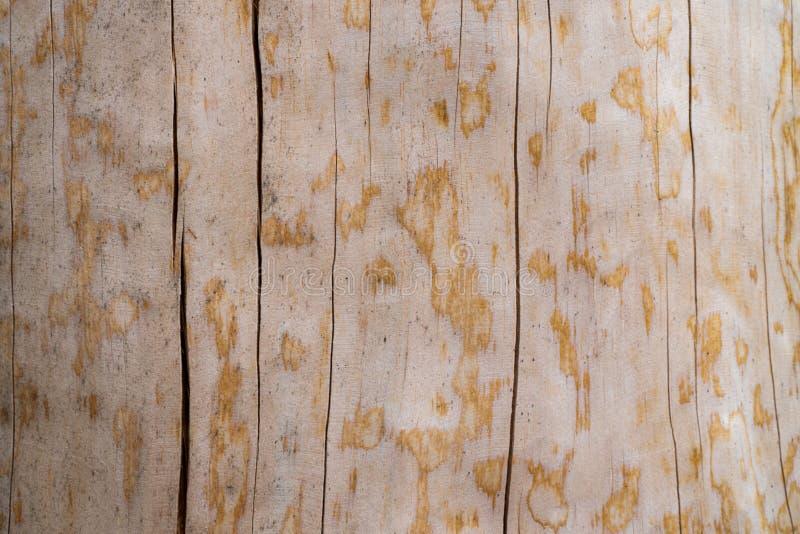 Textura de uma árvore natural com uma estrutura incomum imagens de stock royalty free