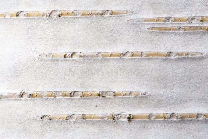 Textura de uma casca de vidoeiro de uma ?rvore nova Macro wallpaper fotos de stock