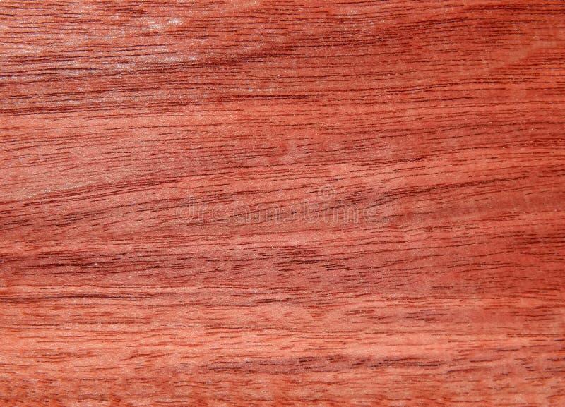 Textura de uma superfície de madeira de um eucalipto do australiano da árvore Folheado de madeira para a mobília fotografia de stock royalty free