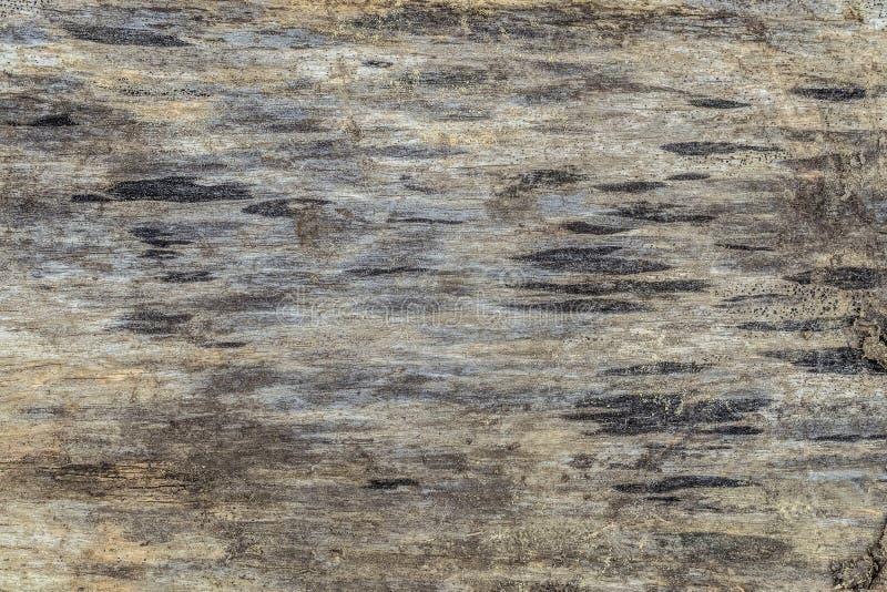 Textura de un corte de la madera cruda vieja oscurecida foto de archivo