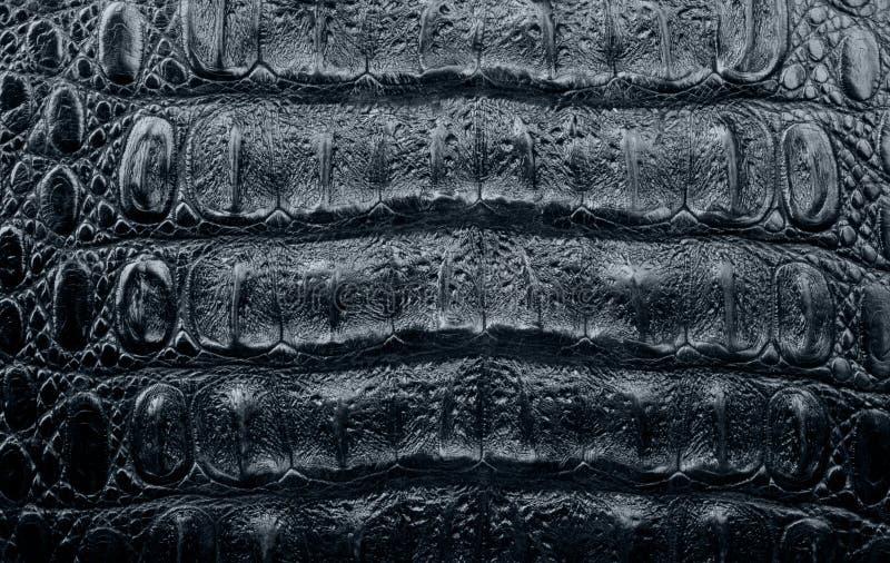 Textura de un cuero del cocodrilo fotografía de archivo libre de regalías