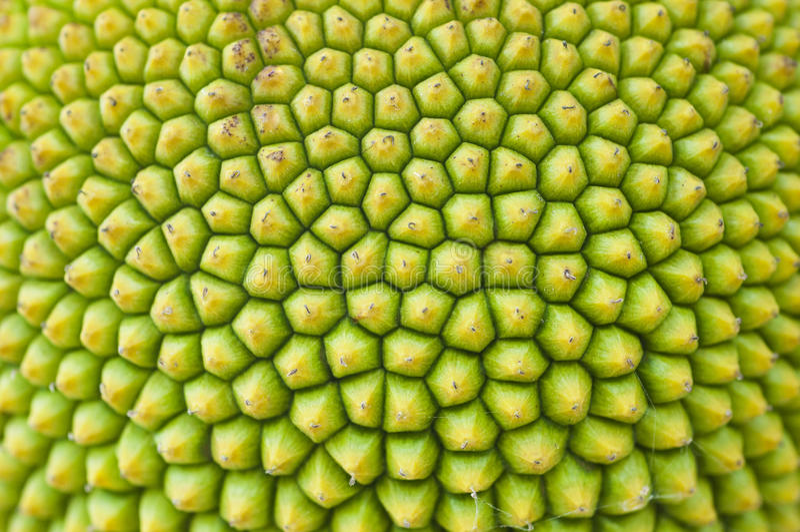 Textura de una fruta de Gato fotos de archivo