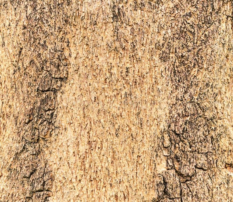 Textura de una madera del árbol imagen de archivo