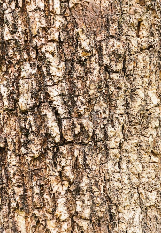 Textura de una madera del árbol fotos de archivo
