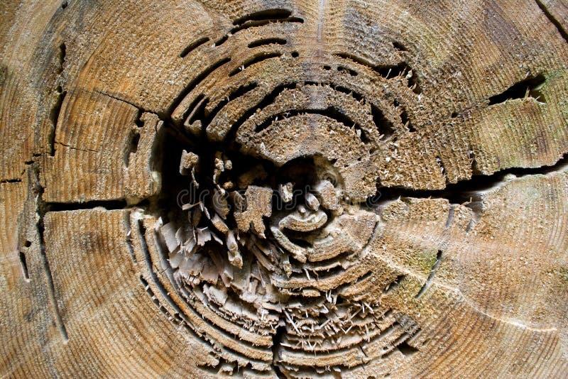 Textura del árbol imagenes de archivo
