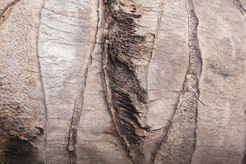 textura del árbol de coco imagen de archivo