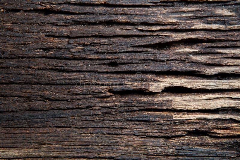 Textura del árbol de corteza foto de archivo libre de regalías