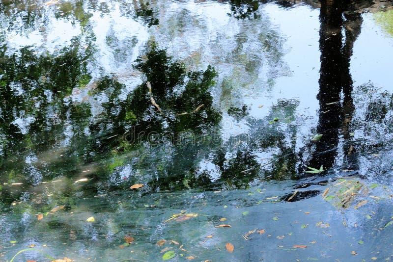 Textura del árbol y del agua fotos de archivo libres de regalías