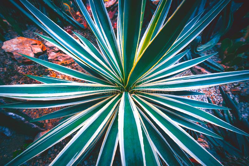 Textura del fondo del cactus imágenes de archivo libres de regalías