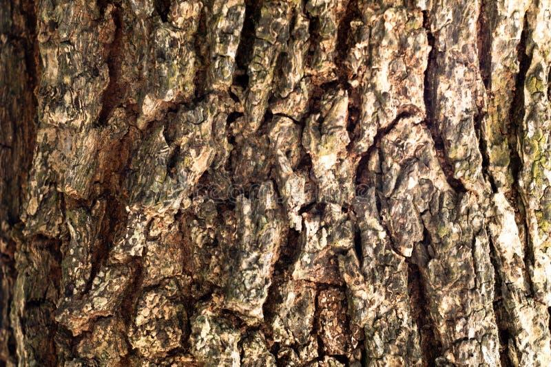 Textura del fondo de la corteza de árbol fotografía de archivo libre de regalías