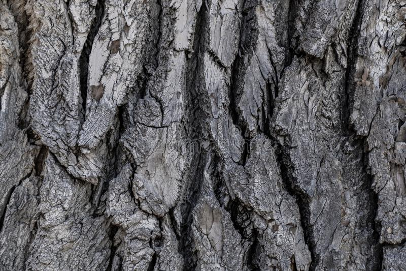 Textura del fondo de la corteza de árbol fotografía de archivo