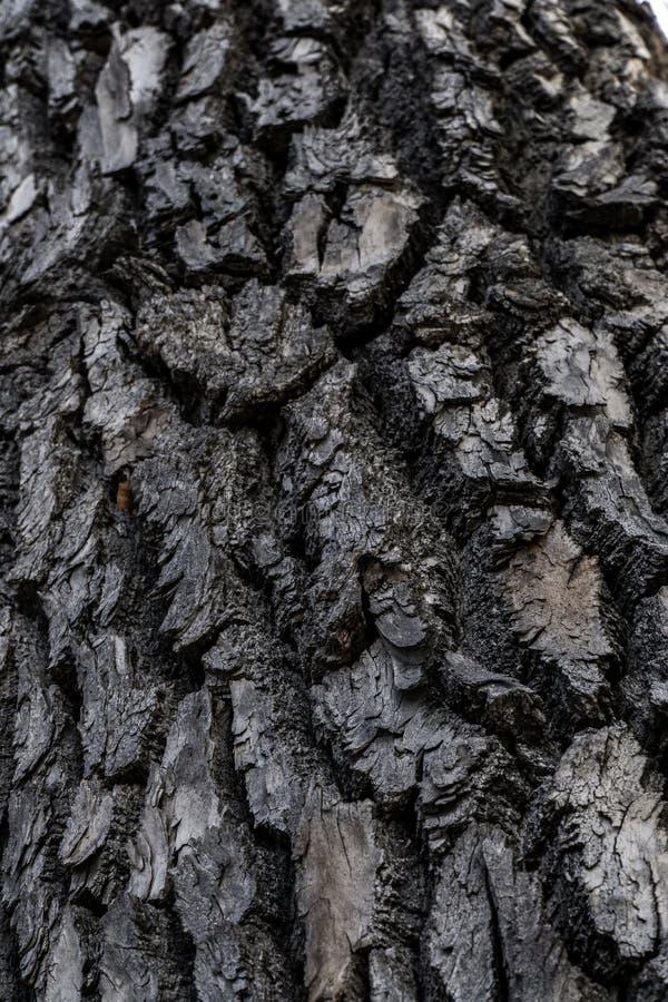Textura del fondo de la corteza de árbol imagen de archivo