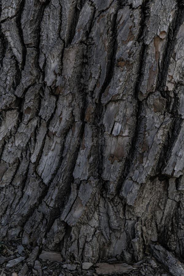 Textura del fondo de la corteza de árbol imágenes de archivo libres de regalías