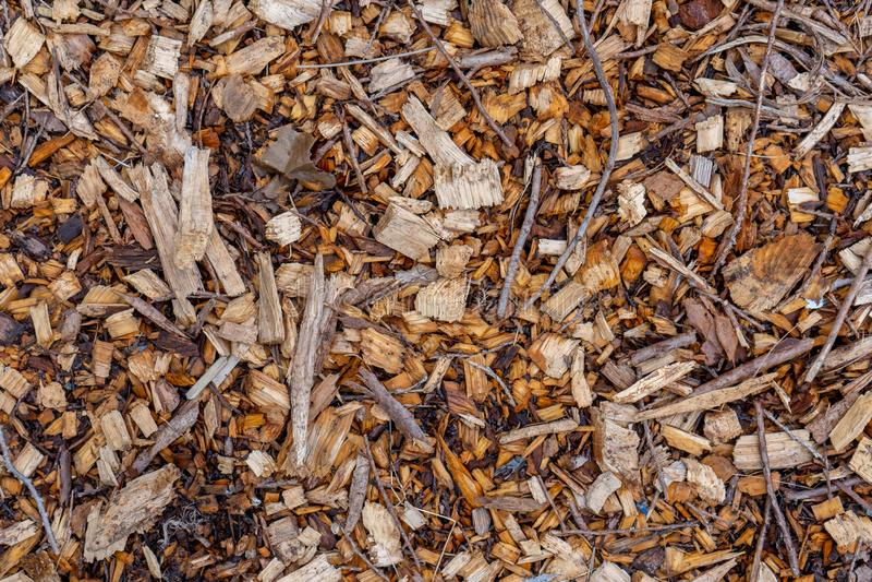 Textura del fondo de la cubierta de tierra del pajote del pedazo de madera del árbol que mira el plumón principal foto de archivo libre de regalías