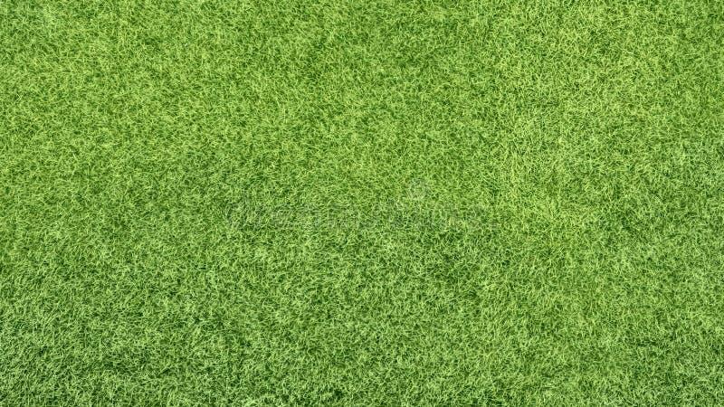 Textura del fondo de la hierba verde foto de archivo
