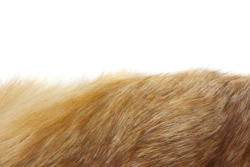 Textura del fondo de la piel de zorro rojo imagen de archivo libre de regalías